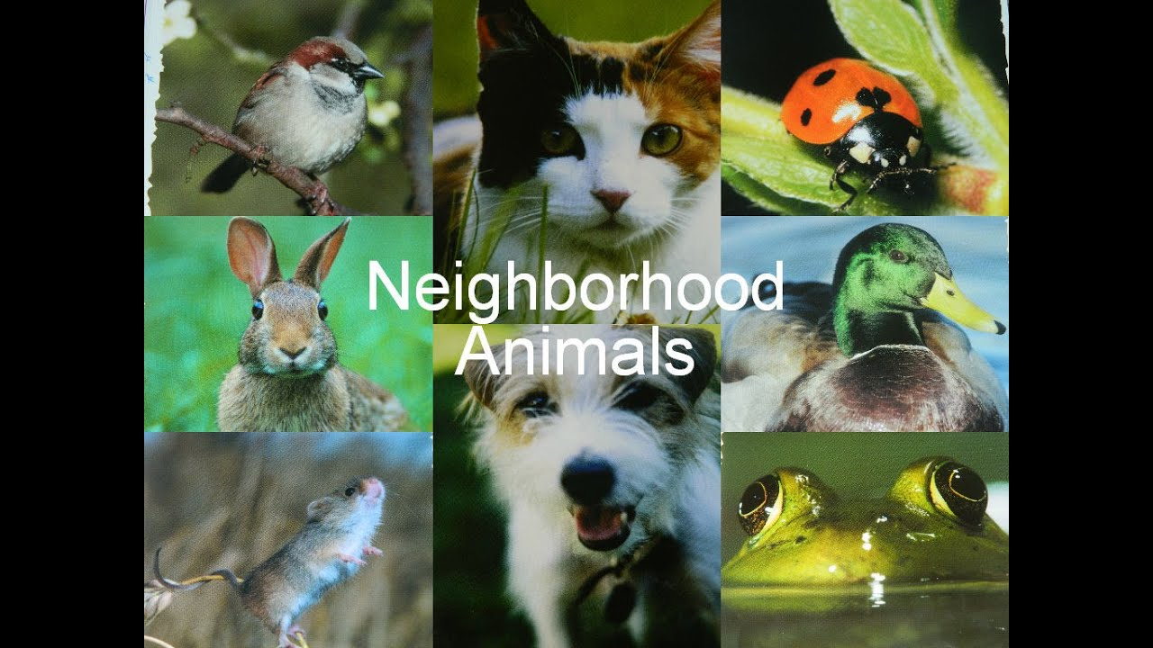 Baby Einstein Neighborhood Animals Rabbit