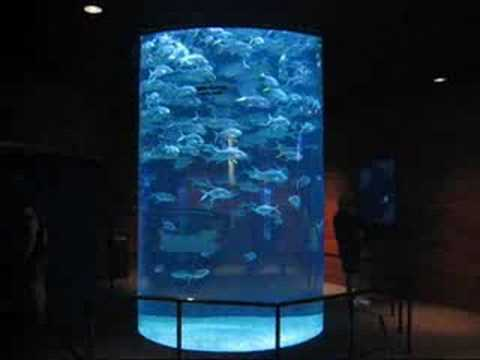 Swimming Fish at Omaha Zoo, Nebraska