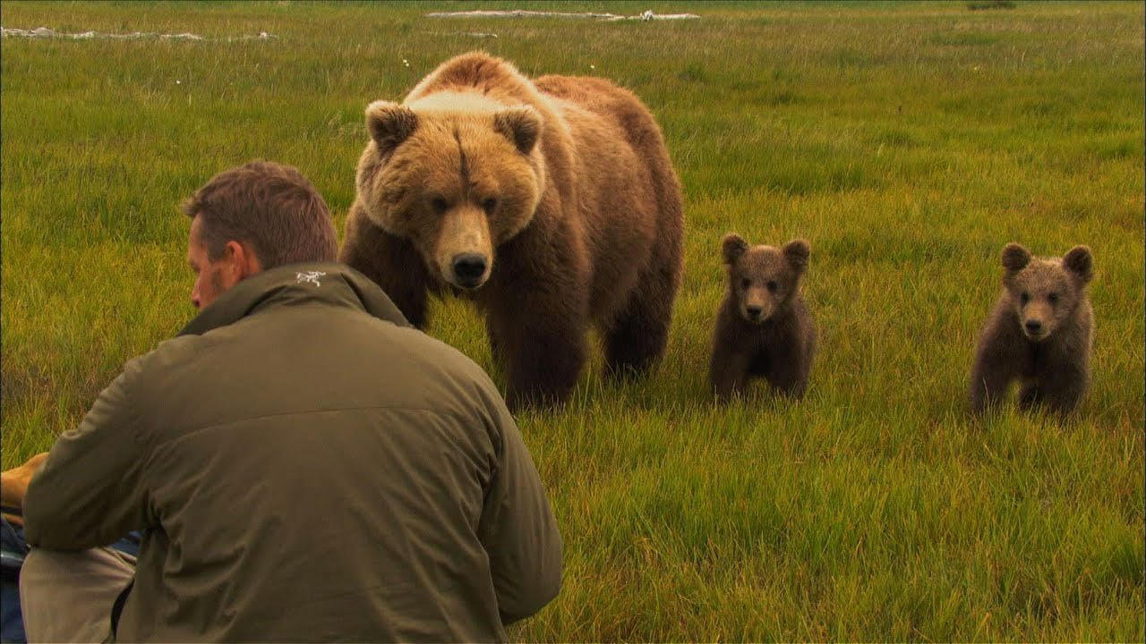 Bears of the Last Frontier | The Road North (Wildlife Documentary)