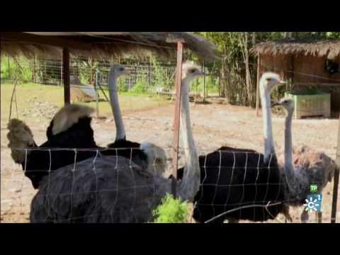 La historia entre Sampaoli y su novia 22 años más joven! de YouTube · Duración:  1 minutos 45 segundos