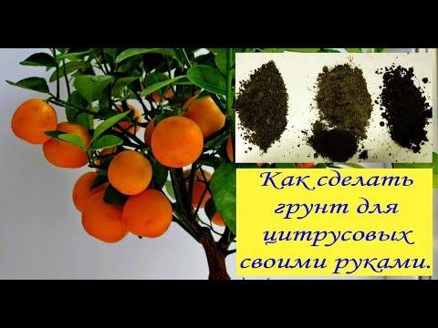 Грунт для цитрусовых своими руками. Сад и огород выпуск 219