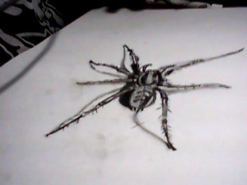 Dessin araign e 3d youtube - Araignee dessin ...