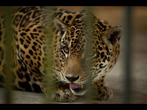 Behind the scenes at the Yangon Zoological Gardens