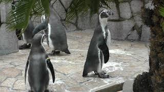 グレープとミドリの子供「はんぺん」 (江戸川区自然動物園)