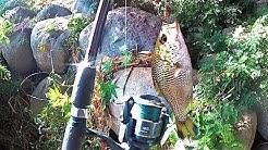 pêche  en rivière SAINTE- Suzanne