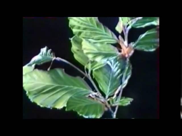 La nourriture des plantes eau, CO2 et minéraux 2min31 Y