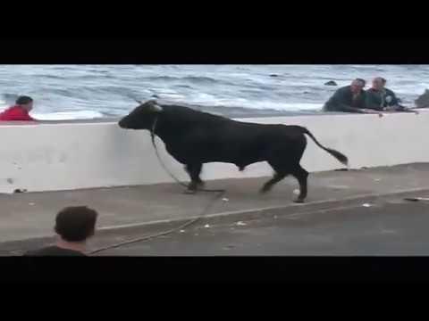 BullFighting festival in Portugal 🌟 Bull fighting accidents 18  🌟 CRAZIES bullfighting festival