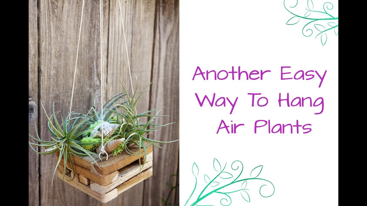 Another Easy Way To Hang Air Plants Youtube