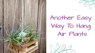 Another Easy Way To Hang Air Plants