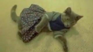 Смешные кошки в одежде