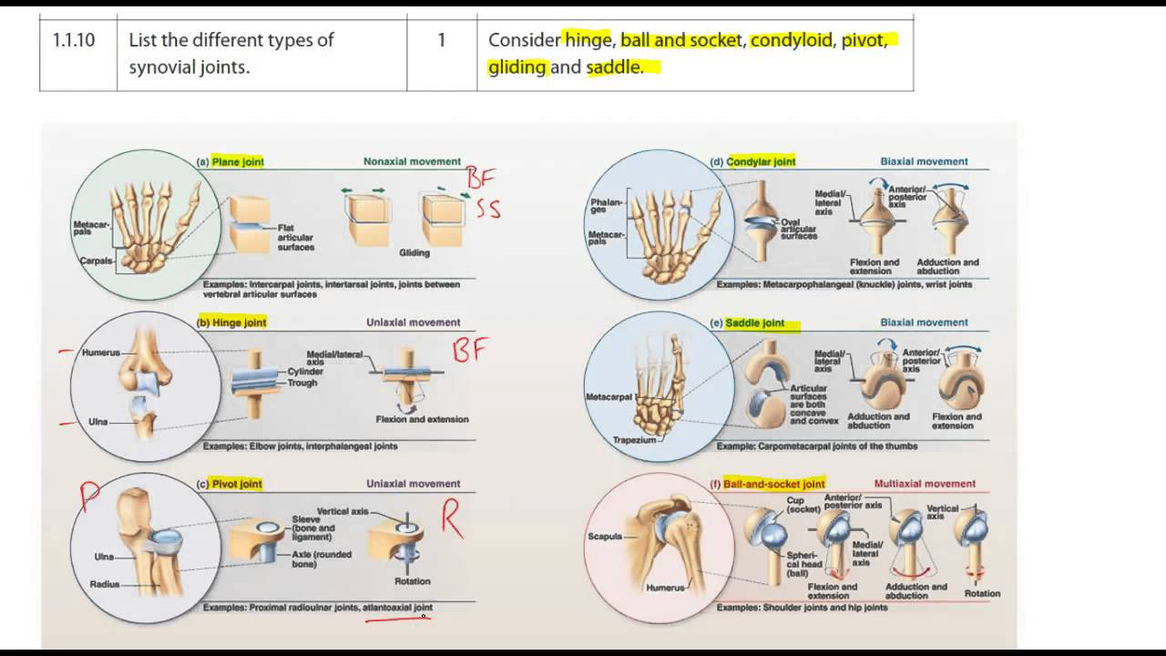 1110 Types Of Synovial Joints Youtube