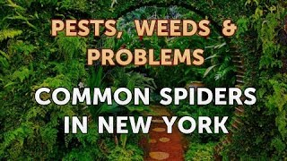 Common Spiders in New York