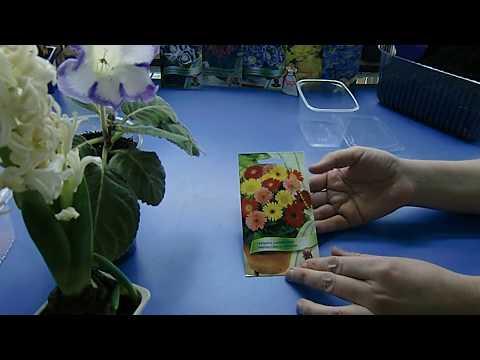 🌼Гербера, посев семян, тест на всхожесть ! Ничего важного🌼 🌱