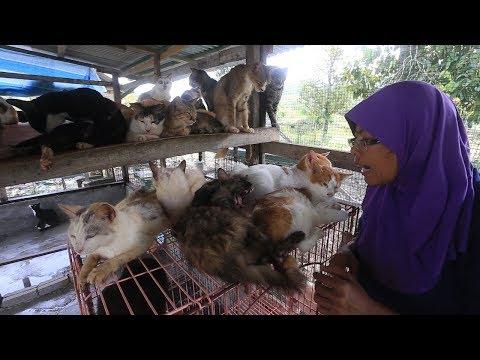 100 ekor kucing pengubat duka