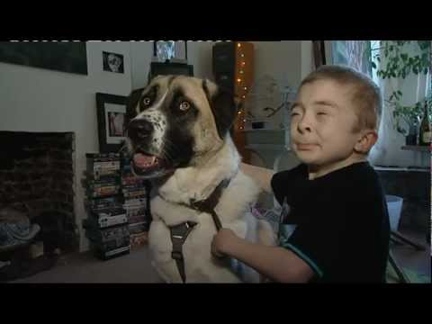 Haatchi the hero dog from YouTube · Duration:  1 minutes 55 seconds