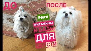 Витамины и БАДы для собак с iherb, утренний утренний уход за мальтийской болонкой Иви.(влог 2)