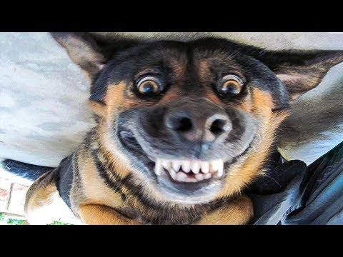 😁 Funniest 🐶 Dogs and 😻 Cats - Awesome Funny Pet Animals' Li