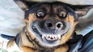 Funniest  Dogs and  Cats  Awesome Funny Pet Animals' Life Videos