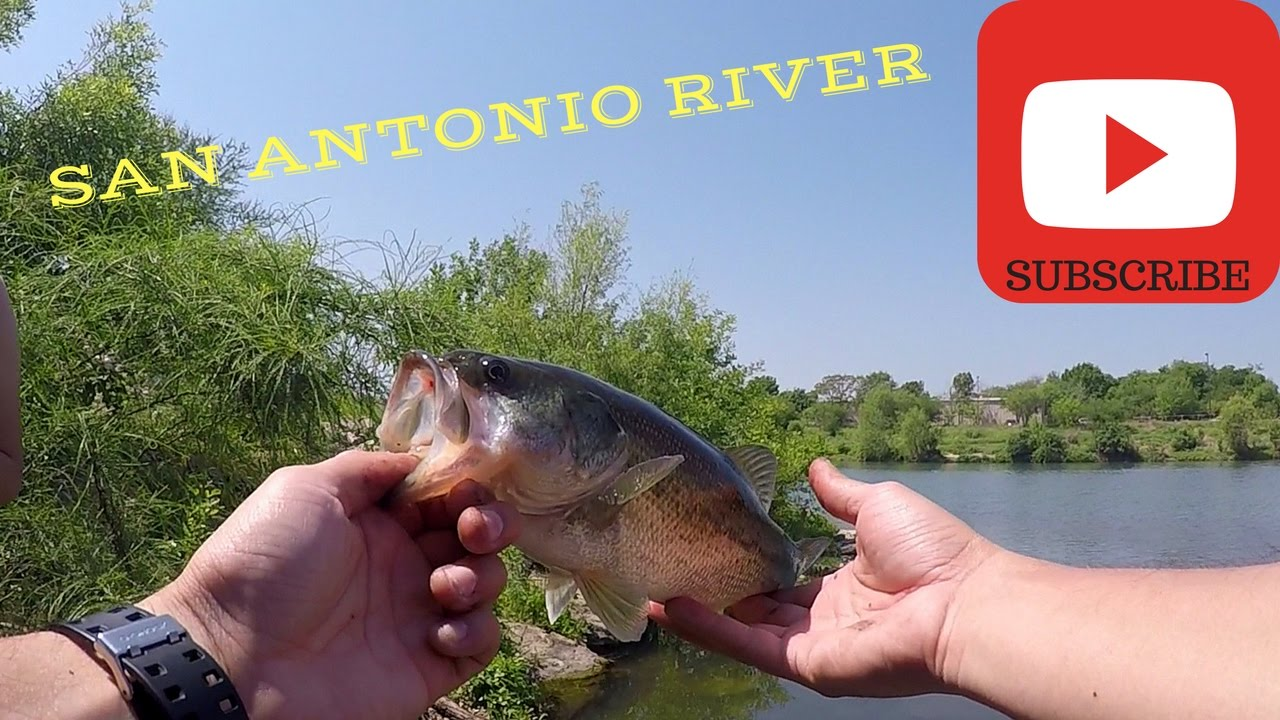 San antonio river bass fishing also bass on a bed youtube for Bass fishing in san antonio