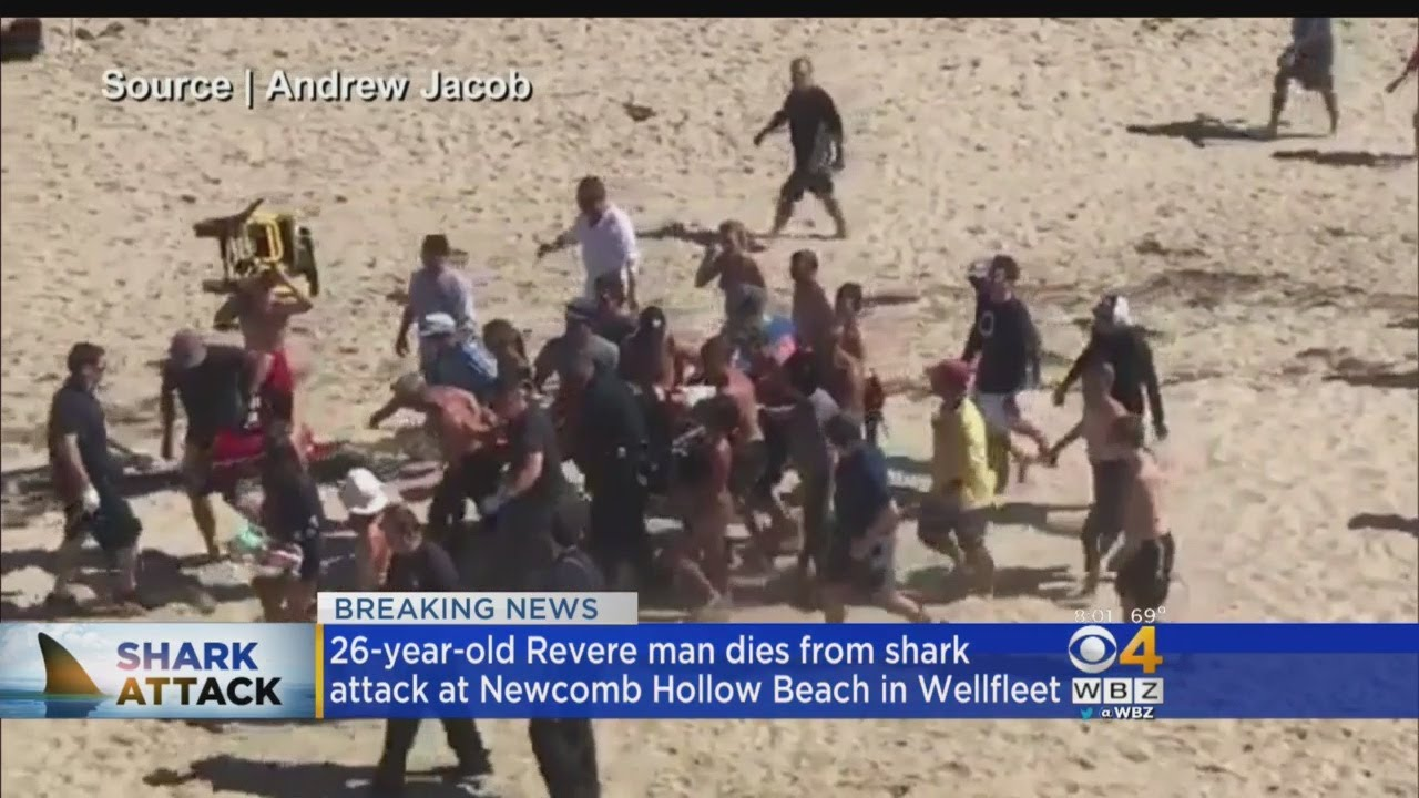 Cape Cod Shark Attack: Man Killed At Newcomb Hollow In Wellfleet