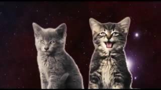 Поющие котята)