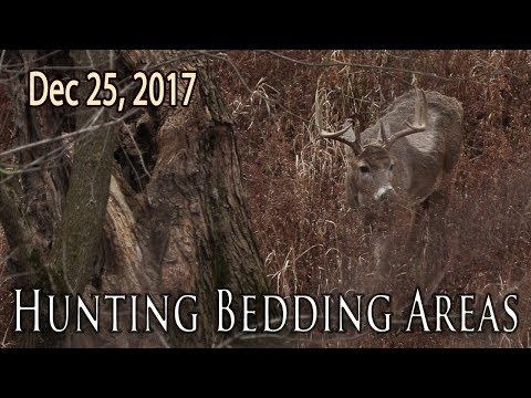 Late Season Bedding Areas | Midwest Whitetail