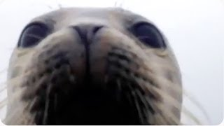 Hey Buddy | Friendly Seal Jumps Aboard!