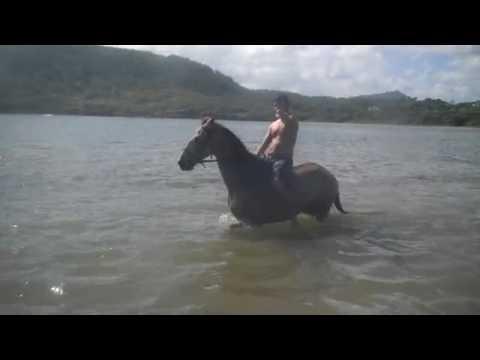 Horseback riding Ocean St  Lucia