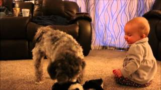 Precious baby tries to steal puppy's toys