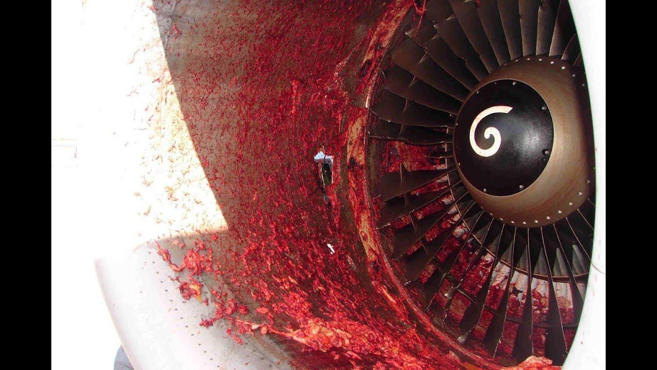 Человека засосало в турбину самолета
