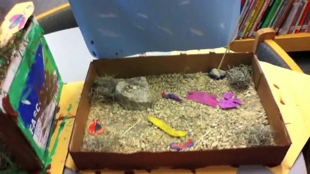 First Grade Habitats Youtube