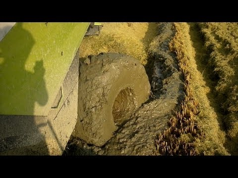 EXTREME CONDITIONS - LEXION 760 - RICE HARVEST in Italy 2013