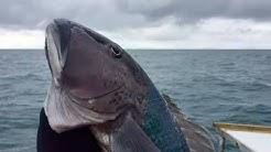 Oamaru Fishing Charters | DEEP SEA FISHING | New Zealand