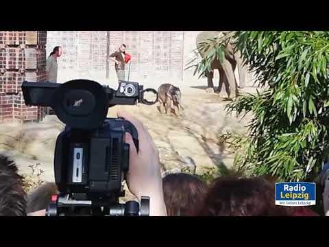 Radio Leipzig - Elefantenbaby im Zoo Leipzig