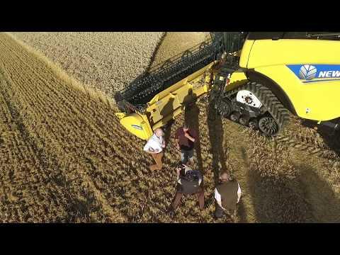 World Record Wheat Yield - Beal Farm