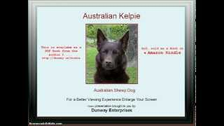 Kelpie (australian Sheep Dog) Tips/training Techniques!
