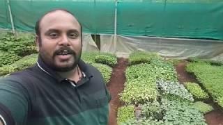 Nursery Plants Hardening