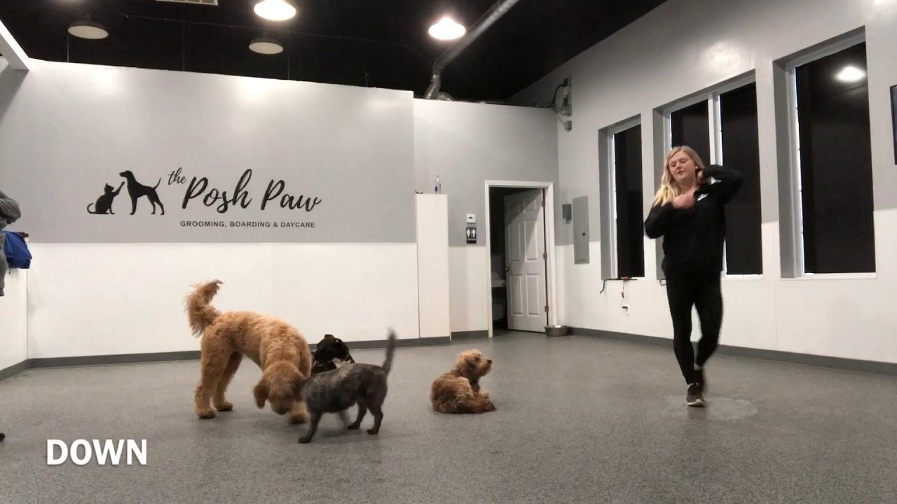 Stamford Dog Trainer Connecticut Dog Trainer 1 Year Old