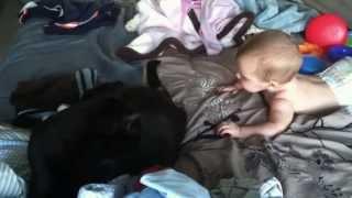 Кошки и дети. Подборка Топ 7