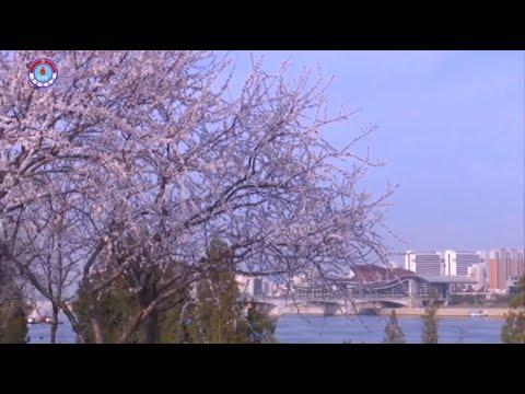 Pyongyang in Spring [DPRK News   English]