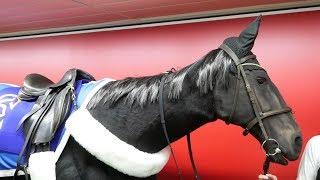 Animatronic horses @ Tokyo (2018.05) [1080p 60]