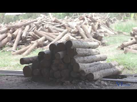 White charcoal producer eyes exports of 1,800 tonnes this year