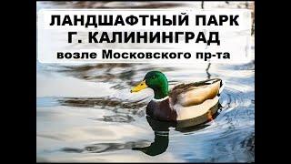 видео Калининградский ботанический сад