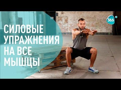 Комплекс силовых Упражнений на все мышцы ДОМА   ФИТНЕС   Дмитрий Мамонтов