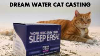 YouTube's First Ever Cat Casting