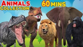 Cryptozoology Learn The Alphabet With Animal For Children To Lear The Best Attacks Of Wild Animals