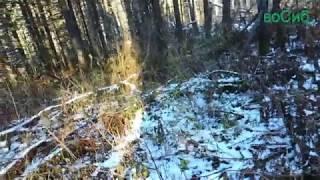 Охота с карабином на зайца 2018