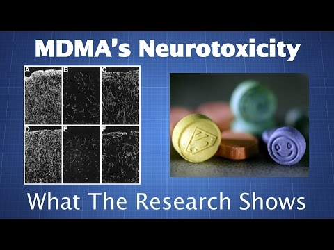 MDMA's Neurotoxicity: What The Research Shows & How To Reduce Your Risk