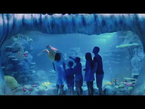 Sydney Big Ticket   SEA LIFE Sydney Aquarium