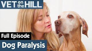 Dog Has Stopped Responding | FULL EPISODE | S03E02 | Vet On The Hill